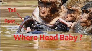 Dana bad mom, Why Dana and Sasha mom monkey do wrong baby?poor baby near drowning