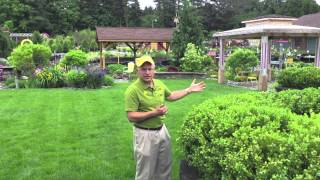 Landscaping Ideas - Deer Resistant Green Mountain Boxwood