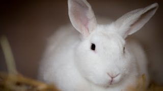 RSPCA NSW Short Tails - Bunnies
