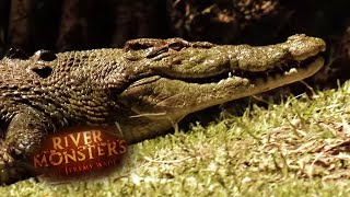 predator-profiles-salt-and-freshwater-crocodiles-river-monsters