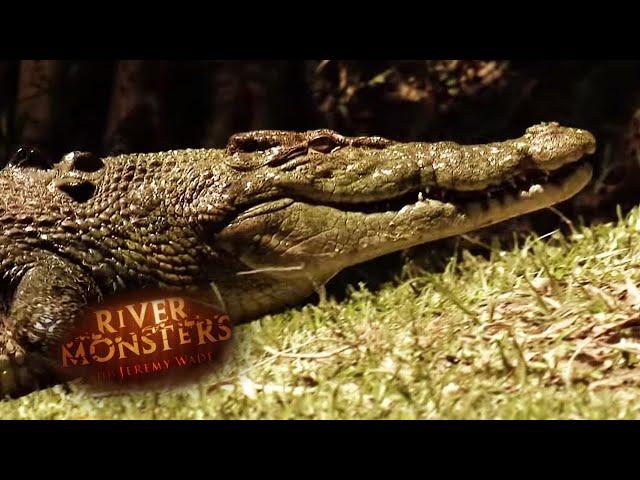 Predator Profiles: Salt And Freshwater Crocodiles - River Monsters