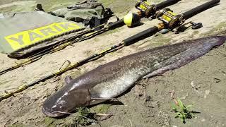 Рыбалка на квок Рыбинспекция нас проверяла Мои снасти для ловли сомиков на печень и выползков
