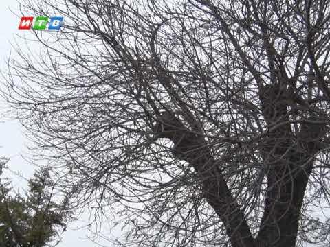 ТРК ИТВ: В ближайшие дни в Крыму ожидается сильный ветер