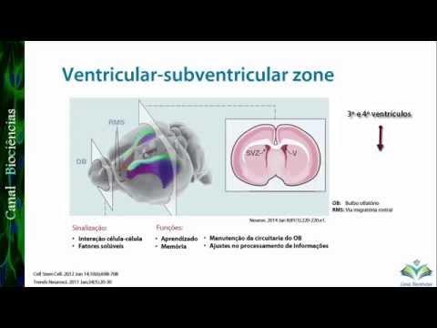Overview: Neurogênese no Cérebro Adulto