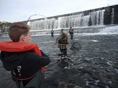 salmon fishing oswego river part 2 youtube
