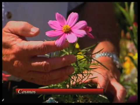 How To Choose Flowering Plants For New Mexico Part 1