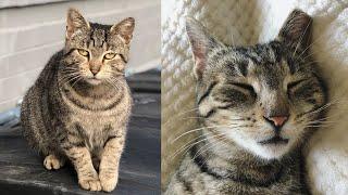 Mila | The Colony Cats