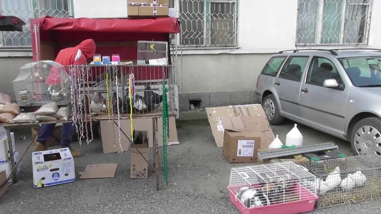 Expoziție columbofilă, păsări și animale mici, la Turda (10.02.2019)