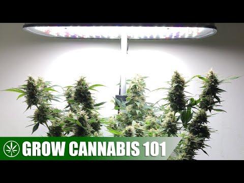 AeroGarden All-In-One Hydroponic Timelapse Cannabis Grow