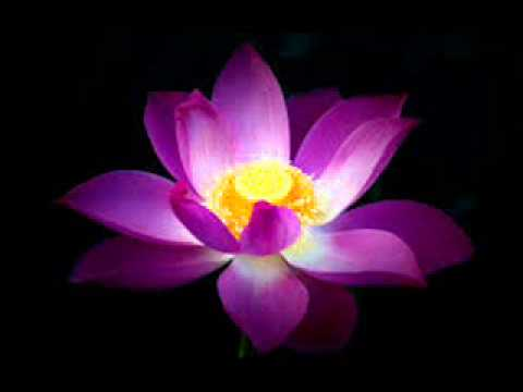 Lotus Flower Youtube
