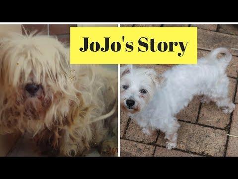 JoJo rescue dog amazing girl doggie rescue story