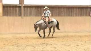 CPHE - Gamaschen zur Kühlung und Massage der Pferdebeine - Cool+Press von Mounty