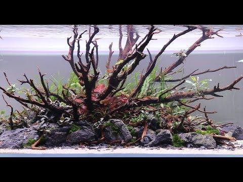 Aquascape 1200 Step by Step Video, New Nature Aquarium by AG