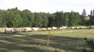 Neals Farm campsite, Canterbury, Kent