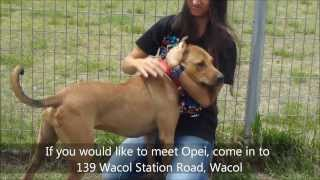 Opei - Available For Adoption At Rspca Qld's Wacol Shelter