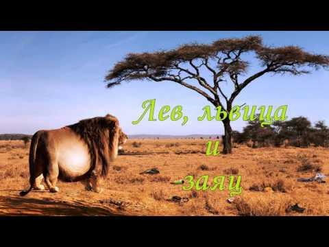 Анекдот про льва и быка, Самые смешные анекдоты на fun