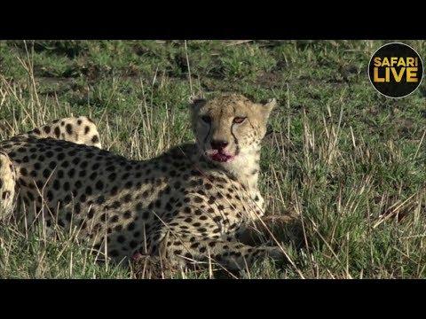 safariLIVE - Sunrise Safari - September 21, 2018