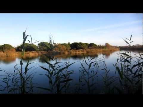 Reserva Natural Delta del Llobregat - El Remolar-Filipines