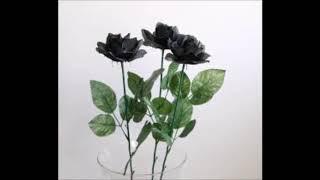 Fantastic Boys - Czarne Róże