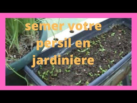 Que faire au jardin en juillet comment semer du persil en jardini re suivi de notre 1 ere vid - Comment semer du persil ...