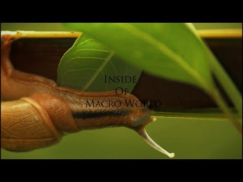 Macro Filmmaking (Inside Of Macro World) With Macro extension tube for canon - Tamil Photography