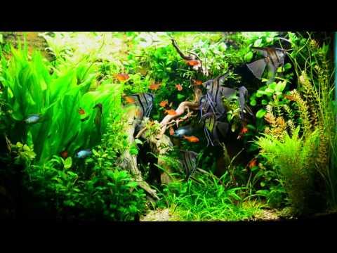 Натуралистичный аквариум в литоральном стиле