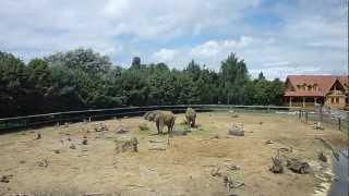 Zoo Olmen