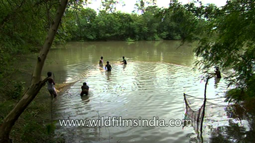 Fishing in a pond in uttar pradesh india youtube for Koi pond india