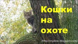 Hunting cat - Кошка на охоте