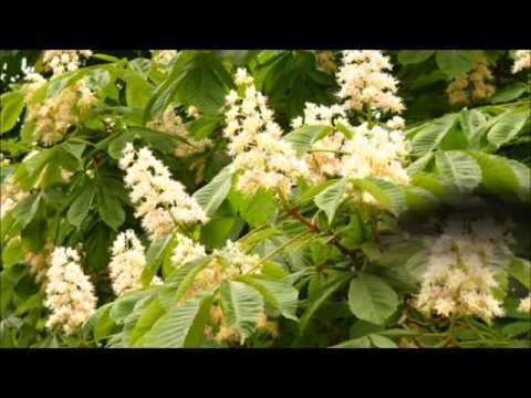 Вена Зимой, Весной, Летом, Осенью - Сезоны и Погода в Вене