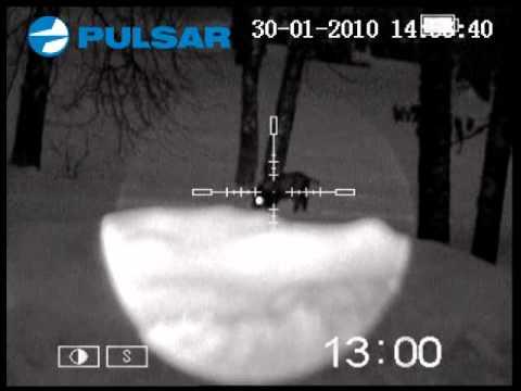 Pulsar digisight n long range youtube