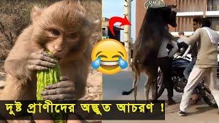 দুষ্ট প্রাণীদের যতসব অদ্ভুত আচরণ !   Funny Animal Moments   Bangla Funny Video 2020  