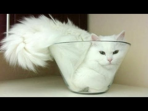 Cats are super funny creatures that make us laugh - Funny cat & kitten compilation