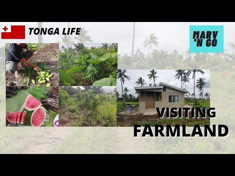 Tonga Life: Tour Around Local Farmland