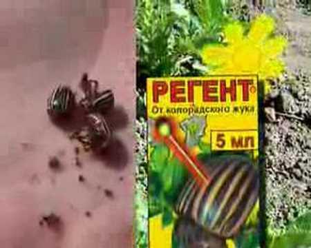 Препарат Регент