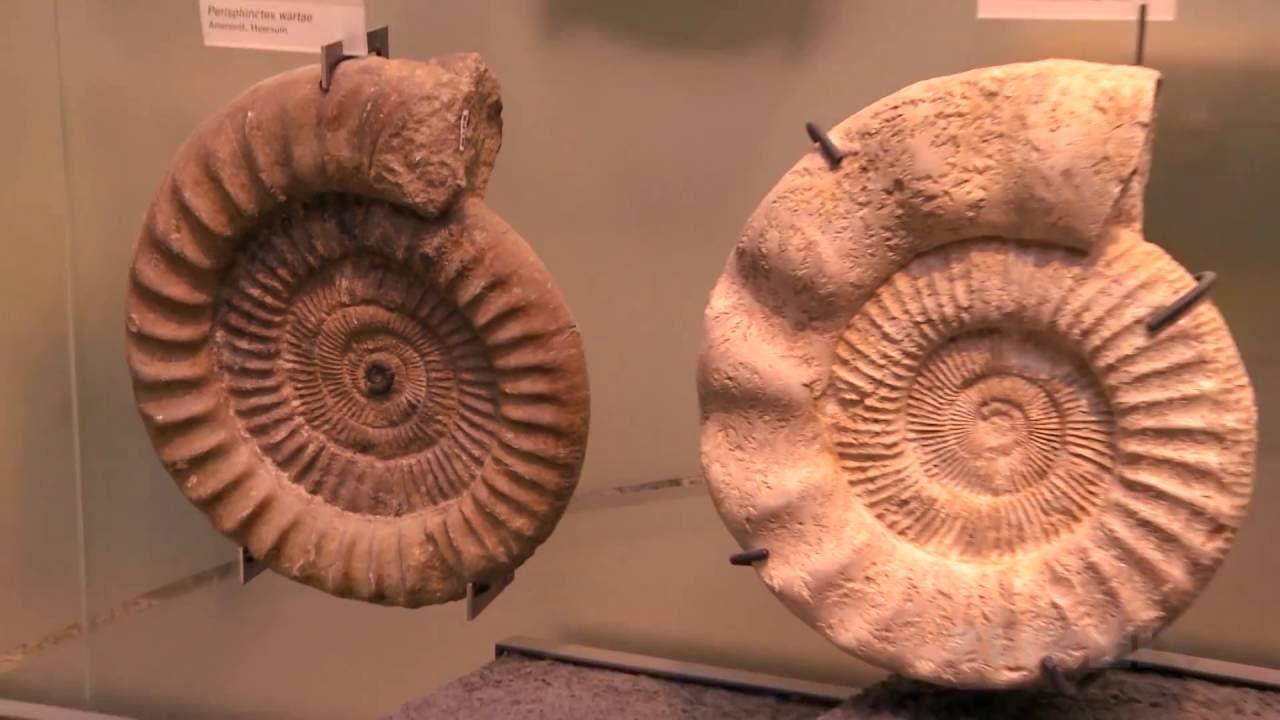 wissensmix was sind fossilien youtube. Black Bedroom Furniture Sets. Home Design Ideas