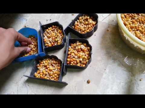 Cocktail, Love Birds & Budgies Parrot Ka Soft Food Very Easy [ Video In Urdu & Hindi ] .