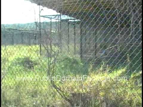 Inside JTF Guantanamo Bay Detention Center Cuba -  Camp X Ray archival stock footage