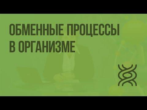 Обмен веществ в организме видеоурок