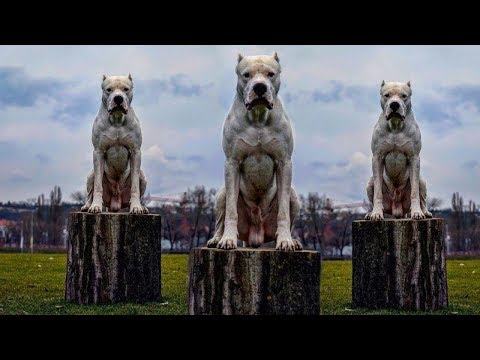 Top 10 Most Expensive Dog Breeds For 2018