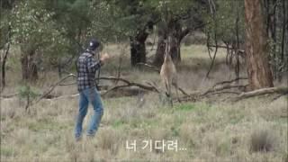강아지 괴롭히던 캥거루 맞은후 아빠불러옴 (Kangaroo vs. Human)