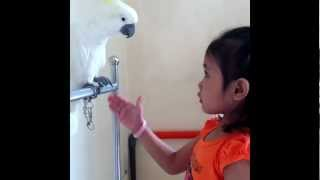 Amazing 4-year old girl train Parrots do tricks!