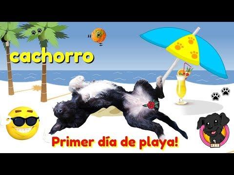 PRIMER día de PLAYA de mi perro cachorro LANA / funny dogs