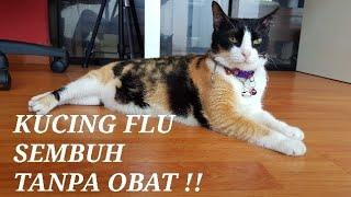 Cara Merawat Kucing Flu. Bisa Sembuh Tanpa Obat Dokter.