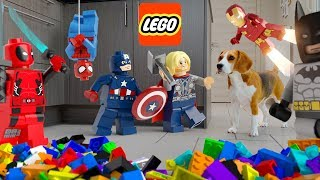 LEGO MARVEL in REAL LIFE : Funny Dogs vs LEGO AVENGERS