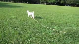 公園でコルクを走らせてみました。