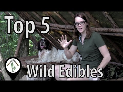 Top 5 Wild Edibles (Temperate Regions)