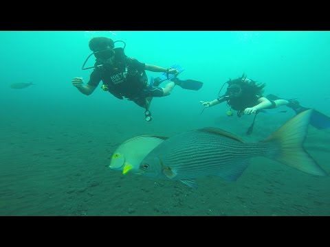 """Traveling"" to Beautiful ""Bali"" ""Diving"" at ""USS Liberty"""