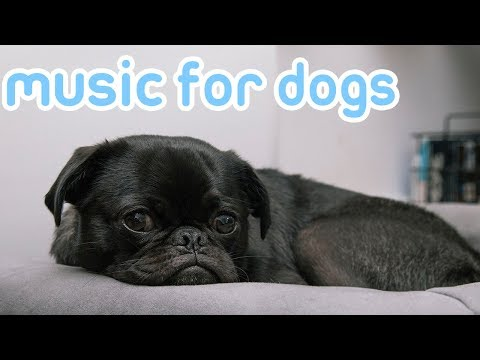 Music to Relax Your Dog! Help Your Dog Sleep and Stay Calm with this Music!