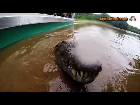 Crocodile river tour in Jaco, Costa Rica